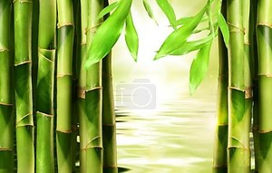 Побеги бамбука, штабелироваться бок о бок