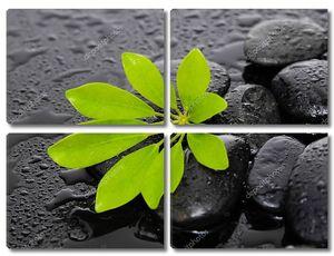 Натюрморт с дзен-камнями и зеленым растением