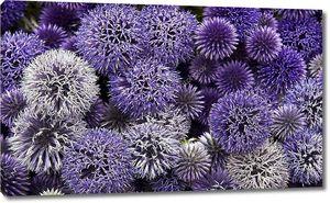Круглые головки полевых цветов