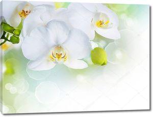 Белая орхидея в солнечных бликах