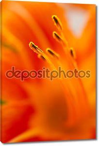 макрос лилии