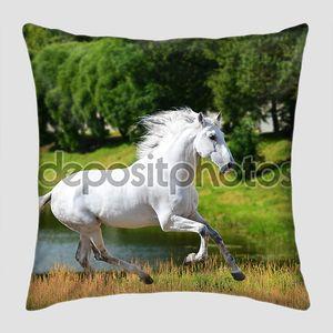 Белая лошадь андалузской (Pura Raza Эспаньола) запускается Галоп в Самме