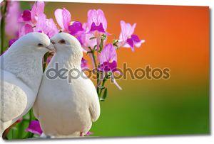 Два любящих белые голуби и цветок бабочка орхидеи
