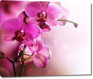 Орхидея цветок границы дизайн