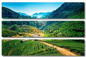 Чайные плантации на гора angkhang, Чианг Май, Таиланд