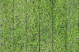 Зеленая трава вид сверху