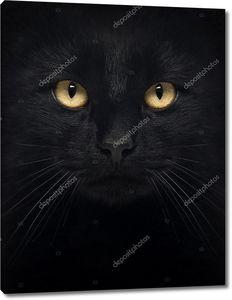 Чёрная кошка смотрит в камеру, изолированные на белом фоне крупным планом