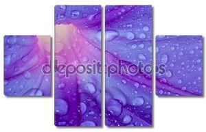 Красивый пурпурный цветок макро с каплями росы