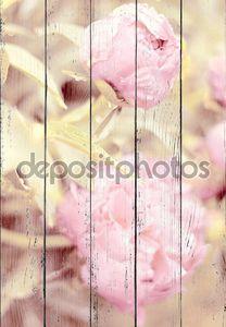 Светло розовые пионы после дождя. Тонированного изображения