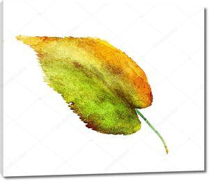 Акварель. Осенний лист на белом фоне