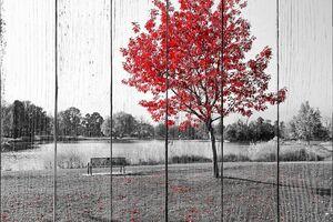 Красное дерево в осеннем парке