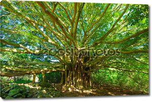 Древо жизни, удивительный «banyan tree»