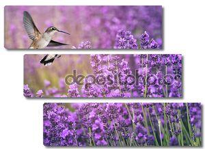 Колибри, питаясь дикими цветами