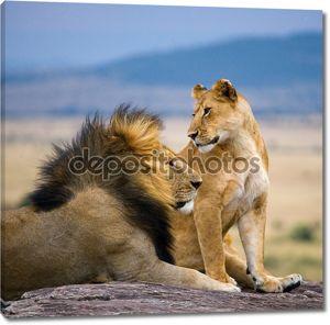 Львы мужчин и женщин