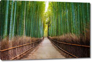 Дорога по бамбуковому лесу