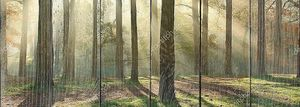 Sunny forest panorama