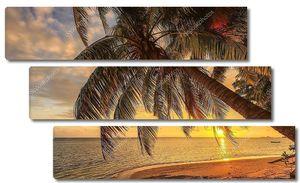 Tропики в закатное время