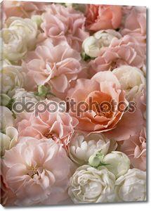 Красивый красочный цветок