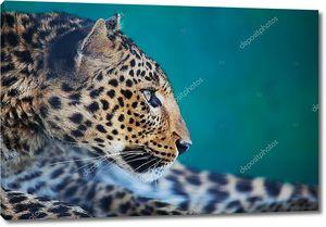 Леопард крупным планом