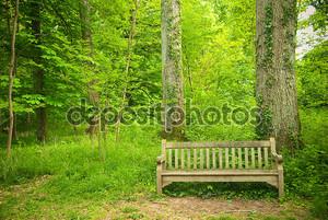 Лес и скамейка