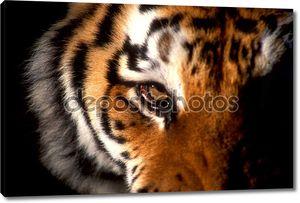 Глаз тигра на портрете