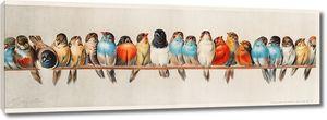 Сидящие птицы