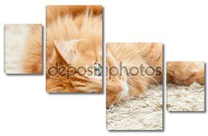 Смешно пушистый рыжий кот лежал