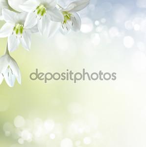 Белые лилии на светлом фоне