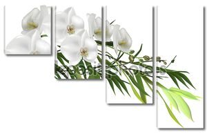 Зеленый бамбук филиал и орхидеи