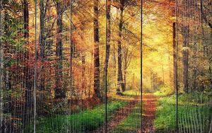 Осенний лес пейзажи с лучами теплого света