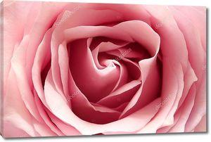 Розовый бутон полураскрытый