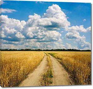 Сельская дорога через пшеничное поле