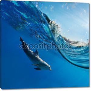 Дельфин плавание под водой