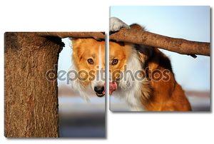 Милые смешные собаки стогах ее язык