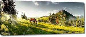 Лошадь пасется в горах