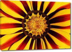 Сердцевинка цветочного бутона