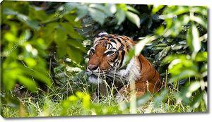 Тигр в зеленых зарослях