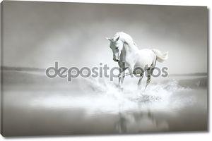 белая лошадь, пробегающая воду