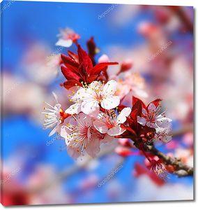 Цветы весной на фоне голубого неба