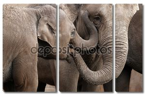 Грей Elephants игра