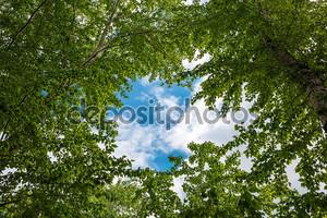 дно зеленые деревья и небо
