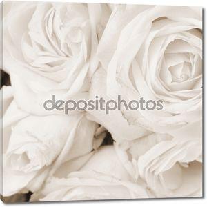 Белые розы в сепия