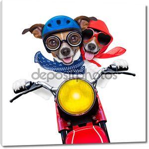 мотоцикл пара собак