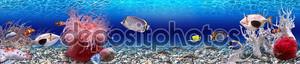 Подводный мир - Панорама