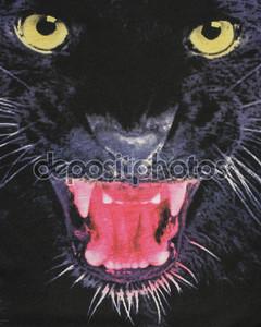 Закрыть на голове Черная пантера на ткани.