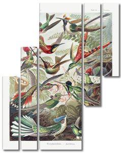 Trochilidae колибри