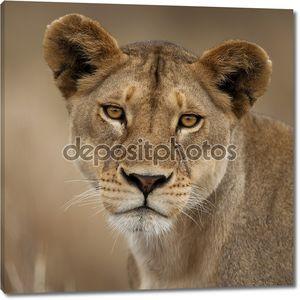 макро портрет национального парка Серенгети, Серенгети, Танзания, Африка