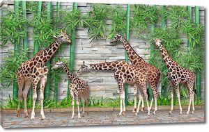Жирафы у каменной стены