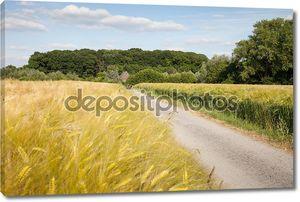 Германия, Северный Рейн-Вестфалия, зерновые поля, поля ячменя и