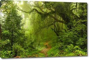 Тропинка в туманный уголок леса